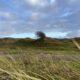 Duinen van Egmond met wuivend helmgras op de voorgrond