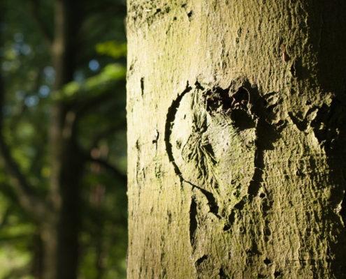 Hart gekerfd in boom
